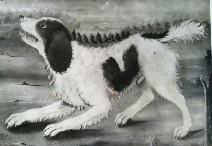 19th century painting of Norfolk Spaniel .