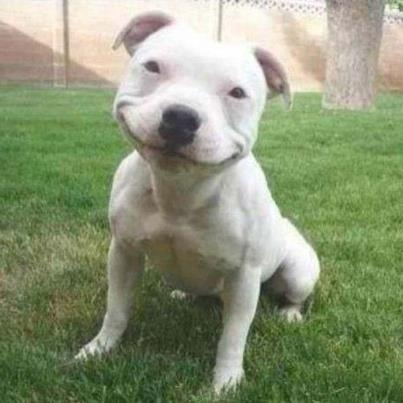 big smile animal - photo #15