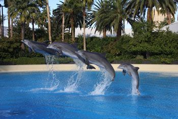 Secret Garden and Dolphin Habitate at the Mirage: $19.95/adults and $14.95/children