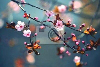 Fotobehang flower, natuur, spring - spring bloeiende japanse boom sakura ✓ Makkelijke montage ✓ 100% ecologisch afgedrukt ✓ Bekijk de opinies van onze klanten!