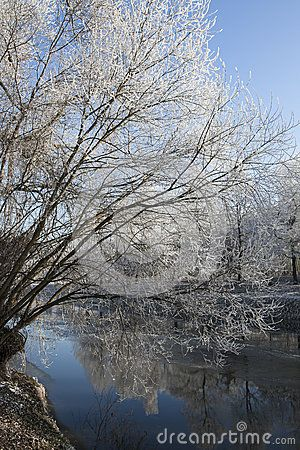 Trees covered in fresh snow next to river on a sunny bright day
