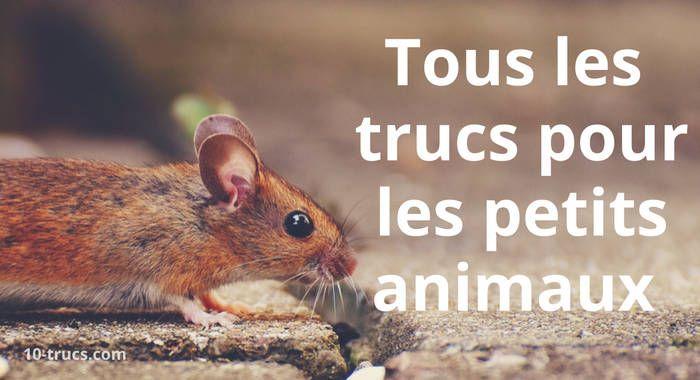 Petits animaux, tous les trucs sur les petits animaux et rongeurs