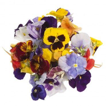 Buy Edible Pansy Flowers Online UK