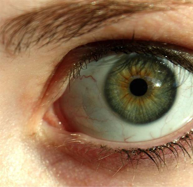 olhos castanhos esverdeados - Pesquisa Google