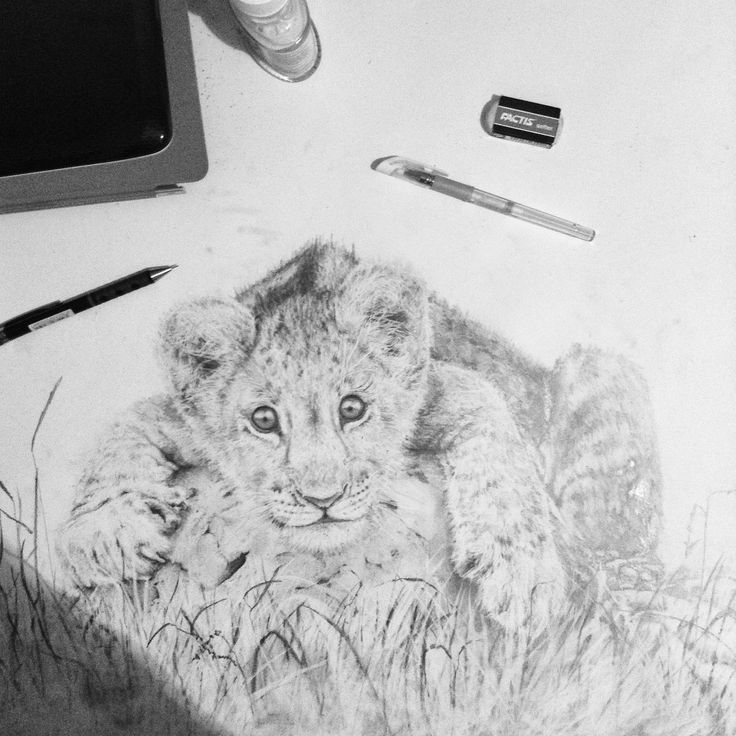 #sketch #draw #drawing #drawings #paint #painting #art #animal #animals #wild #lion #baby #babylion #wilds #paper #pencil