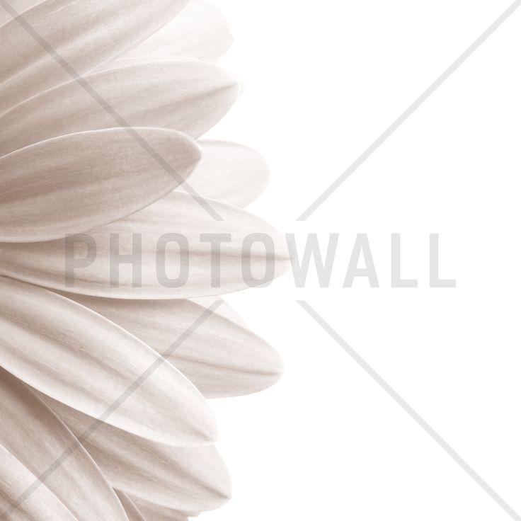 Pink Petal - Sepia - Fotobehang & Behang - Photowall
