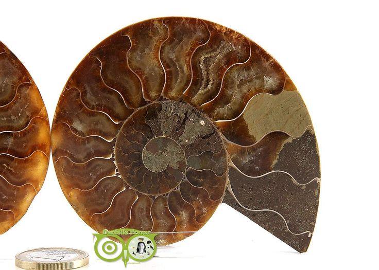 Ammoniet Fossiel paartje AMF-PR-1-RM-187 | Webshop Danielle Forrer | Mineralen | Klankschalen | Koshi shanti's | Tingsha | Inzichtkaarten | Pendels | etc | Wieringerwerf