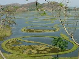 Loktak Lake, the largest freshwater lake in northeast India, also called the only FLOATING LAKE in the world due to the floating phumdis (heterogeneous mass of vegetation, soil, and organic matters at various stages of decomposition) on it, is located near Moirang in Manipur state, India.