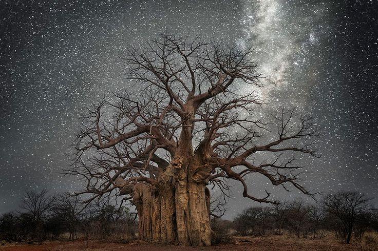 Photos magiques des plus vieux arbres du monde de nuit par Beth MooPour Son projet Diamond Nights, elle a voyagé en Afrique et a trouvé ses nouveaux sujets