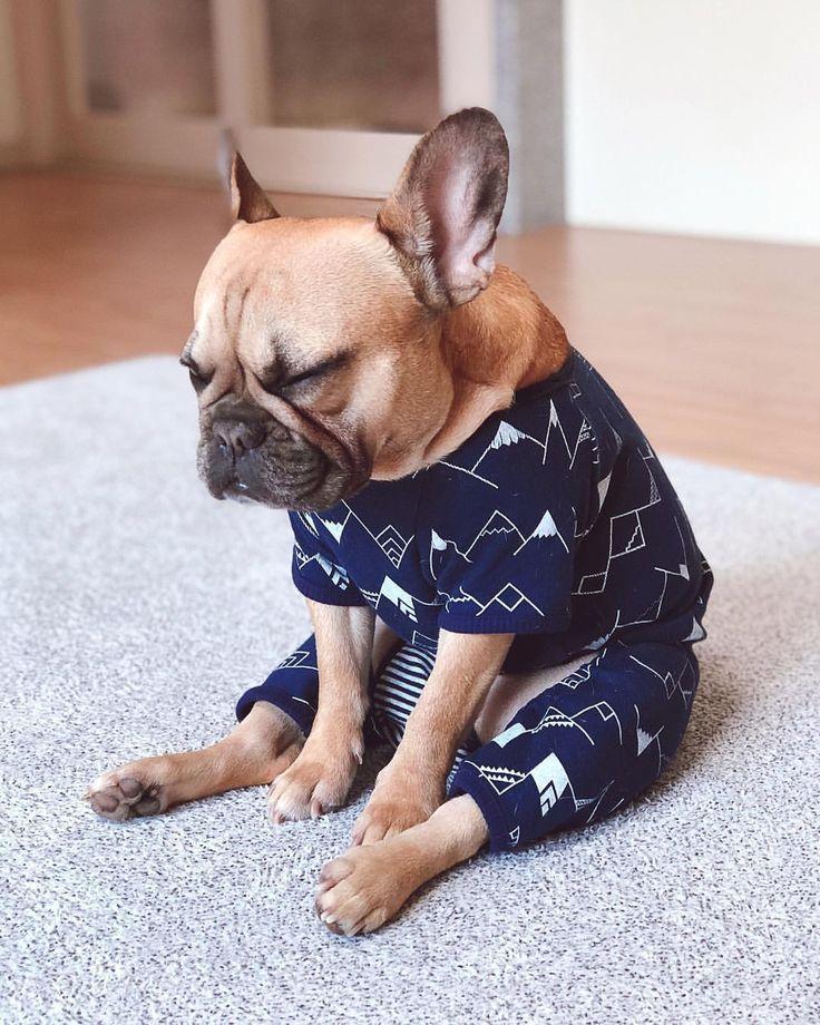 A Puppies Is Show A Vital Yoga Process Rescuedog Puppiesandyoga