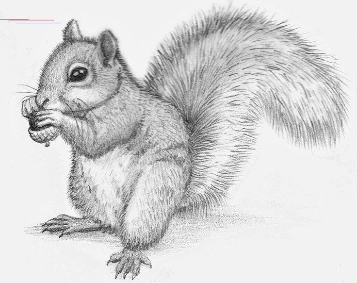 Ahnliche Artikel Wie Bleistift Zeichnungen Von Tieren Ich Zeichne Alles Was Sie Wollen Wilde Tiere Animal Sketches Pencil Drawings Of Animals Pet Portraits