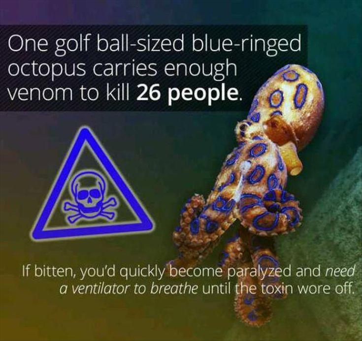 24 Fun Facts
