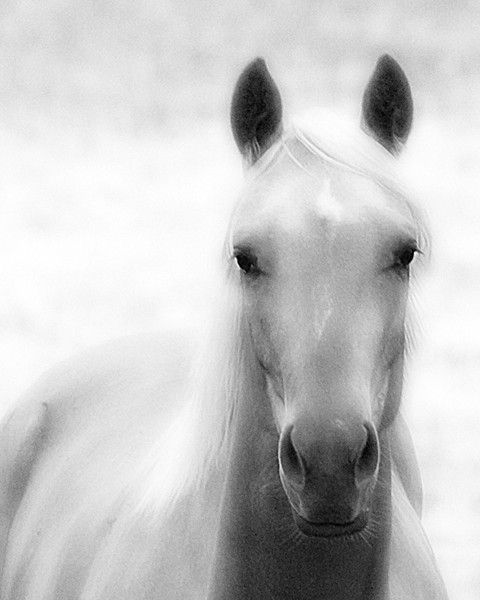 11x14 Black and White Horse Photography Print Angel by jrefer, $45.00