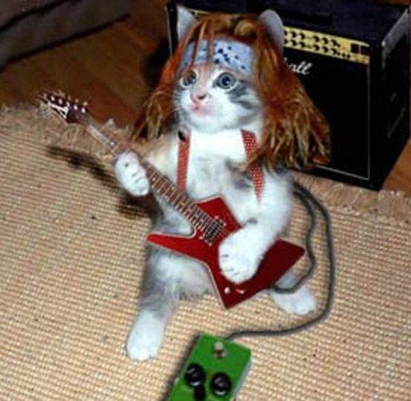 metal music charicatures    fotos gatos gatitos divertidas y graciosas