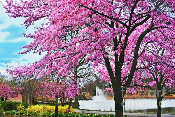 Branch Brook Park Spring In Bloom By Regina Geoghan Brook Park Spring Bloom