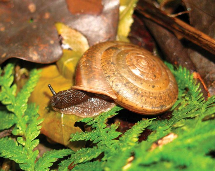 New Land Snail Species Discovered in Taiwan named in honor of struggle for non-traditional marriage rights.  -Kat Dodel