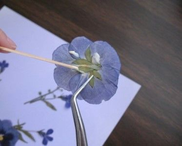 How To Use Pressed Flowers - A Simple 5-Step Guide