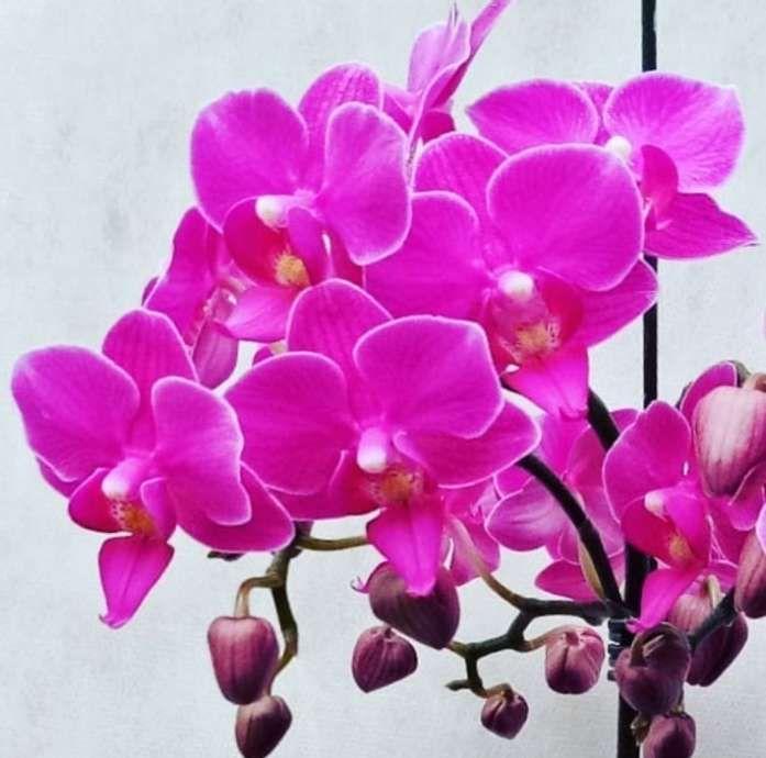 900 Gambar Bunga Terindah Ideas In 2021 Beautiful Flowers Photos Beautiful Flowers Images Planting Roses