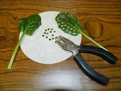 Photosynthesis lab. Could help students understand/remember the photosynthesis inputs/outputs that they always seem to struggle with. Science 7 plants for food and fibre.