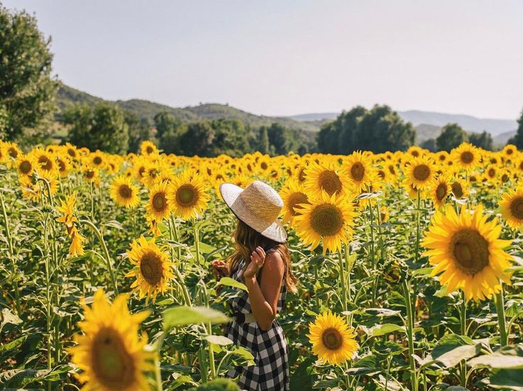 It's almost this time of year again  #sunflowerseason #summeriscoming #france #provence #gmgtravels