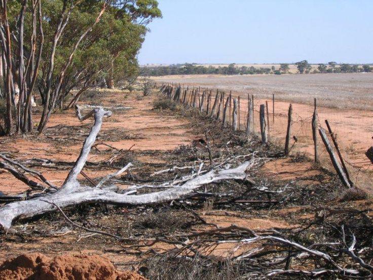 Rabbit Proof Fence  in Central Wheat Belt of Western Australia