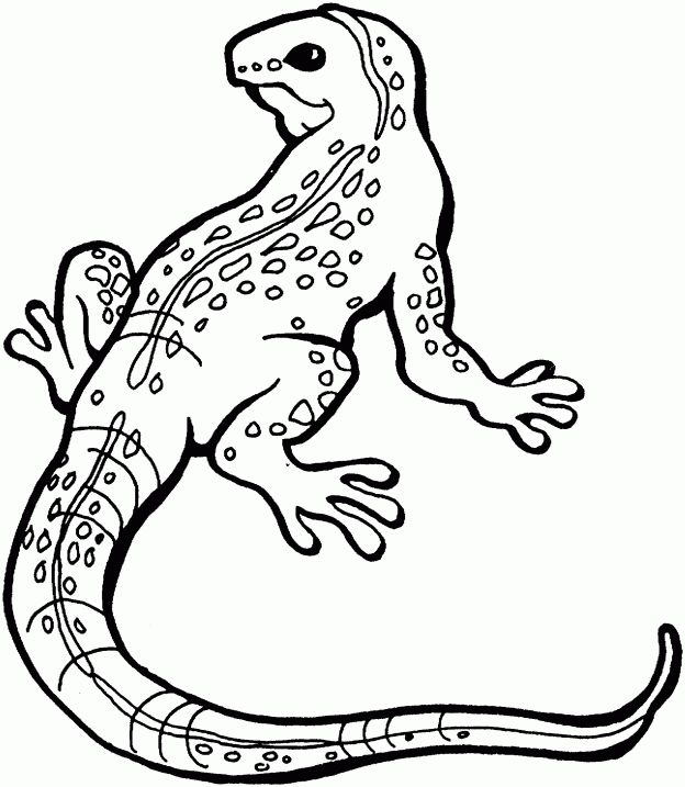 Lizard Coloring Pages free printable for kids Enjoy