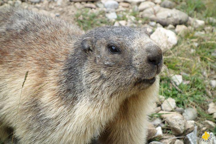 Guillestre - Sentier des Marmottes - activité famille - Voyages et Enfants