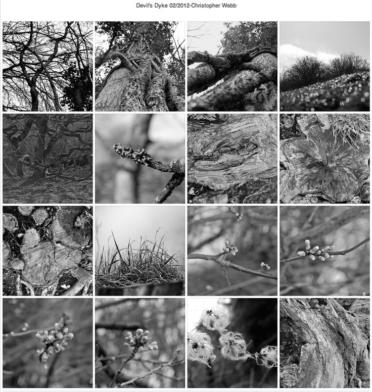 Nature Photography-Typology, by Christopher Webb