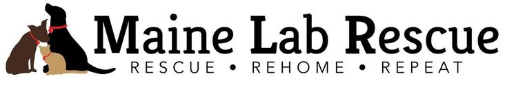 Maine Lab Rescue is an all-breed dog and cat rescue, with a focus on Labs and Lab mixes. Animals are rescued from high kill shelters or other undesirable circumstances in the south. Before arriving in Maine, they receive vaccinations and other vet care, and transported north for adoption.