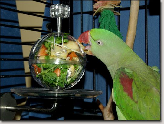 Buffet Ball & Cage Mount