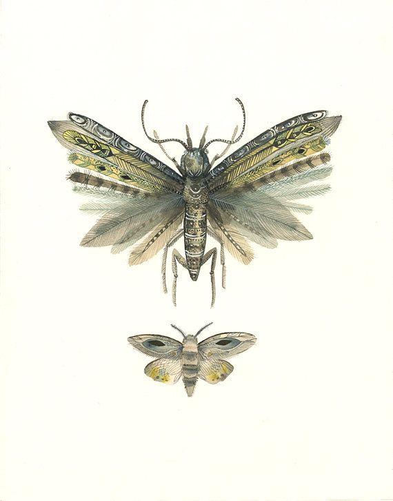 P Moth Decorator 67 best Butterflies Bu...