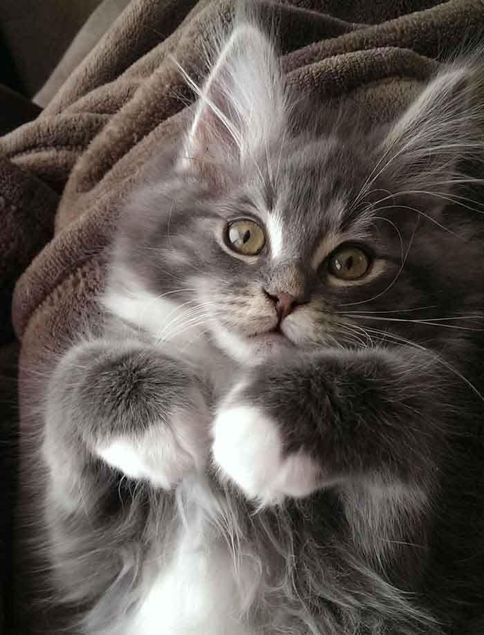 Pin On Critter Cuteness