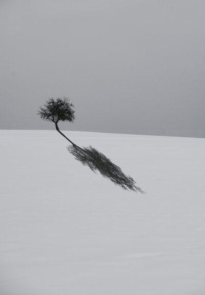 Slagschaduw, het lijkt alsof de boom doorloopt, maar dat is niet zo.