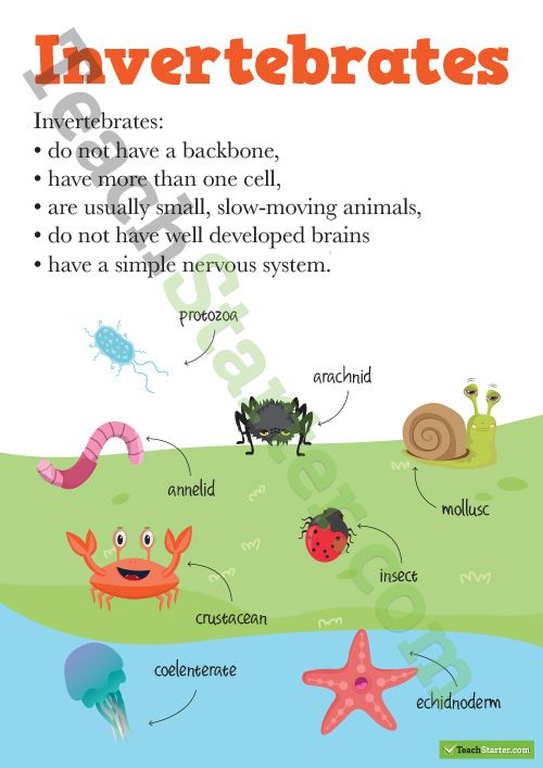 Vertebrates and Invertebrates Posters Teaching Resource                                                                                                                                                                                 More