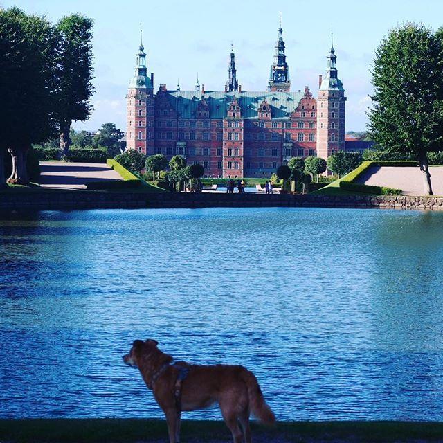 Schlosshund 10 neue Urlaubsziele mit Hund 2016 #dänemark #frederiksborg #kopenhagen #schloss #hund #dog #urlaubmithund #schlosshund