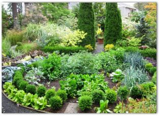 Free Garden Design Software plan a garden Free Garden Layout Designs Vegetable Knot Garden Lots Of Good Info