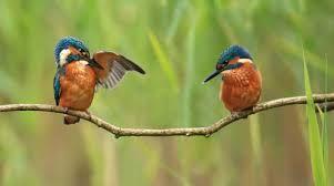 Image result for british birds of prey
