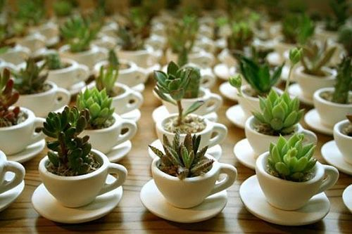 Cute idea for decorating outside.. Small plants in tea cups, placed on saucers