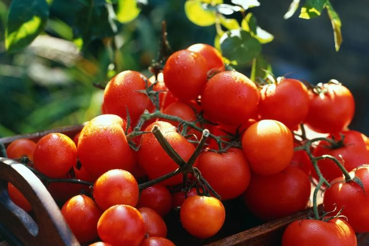 Tomato Varieties for Your Container Garden | Growing Tomatoes in Pots | HGTV