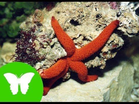 Estrellas y erizos de mar (Equinodermos)