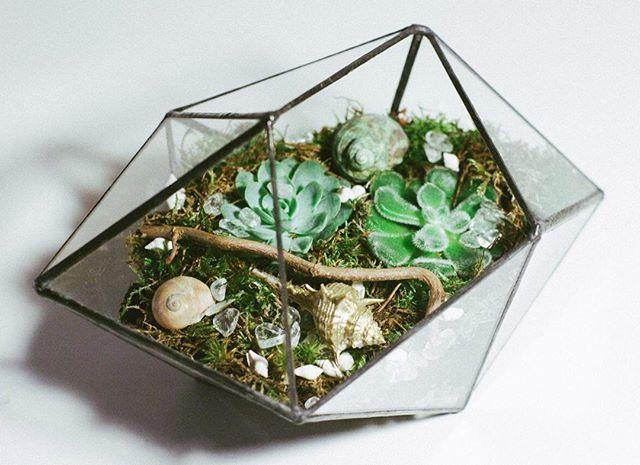Малыш кристалл🌲🌰 #флорариум #террариум #leviflower #мох#суккулент #кактус #декор#подарок#terrarium #moss#succulent #cactus