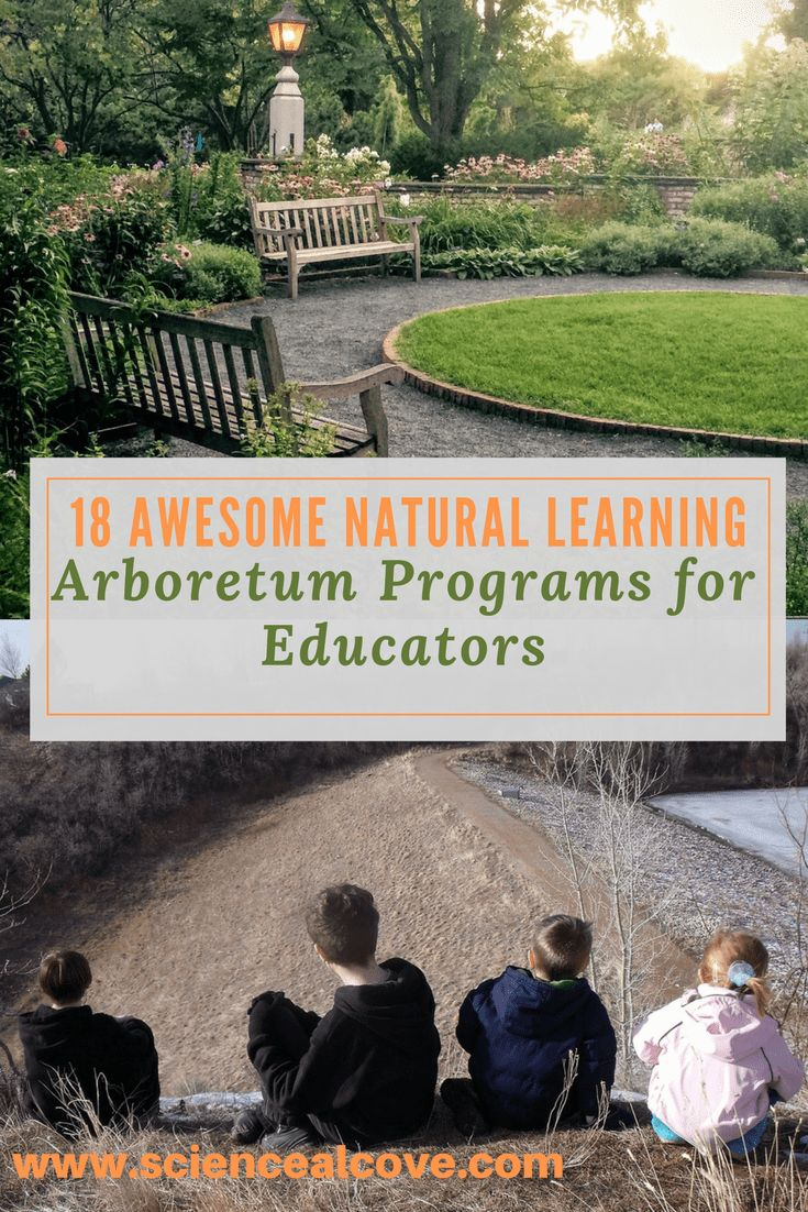 Inside find many ideas for kids from preschool to adult perfect for field trips to an arboretum.  Projects and activities are included to improve fine motor skills, encourage outdoor education and field experiments. #arboretum #preschooltrees #treeprojects
