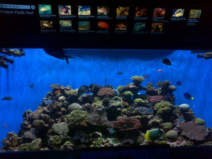 Birch Aquarium Cool Pinterest