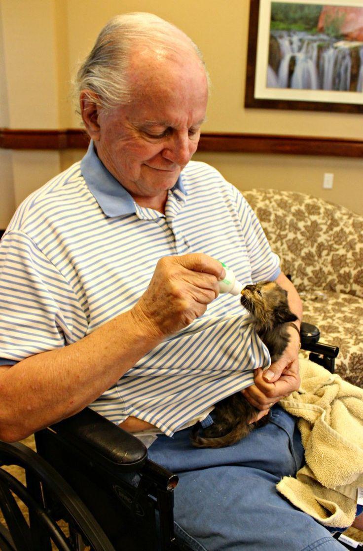 История о том, как новорожденные котята помогли пациентам дома престарелых