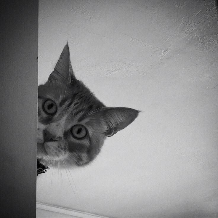 Donatello #gato #cat #chat