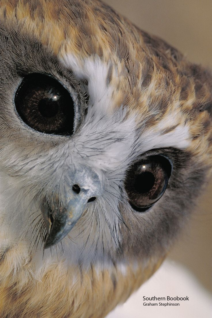 Sweet Owl Eyes