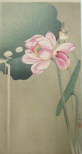 Ohara Koson小原古邨 大短冊 版元大黒屋 Songbird and lotus O-tanzaku Daikokuya (Matski Heikichi) 蓮の花に小鳥を配した、美しい色彩の大短冊です。左隅の葉から流れ落ちる水が、大短冊を好む古邨の特徴をよく示しています。