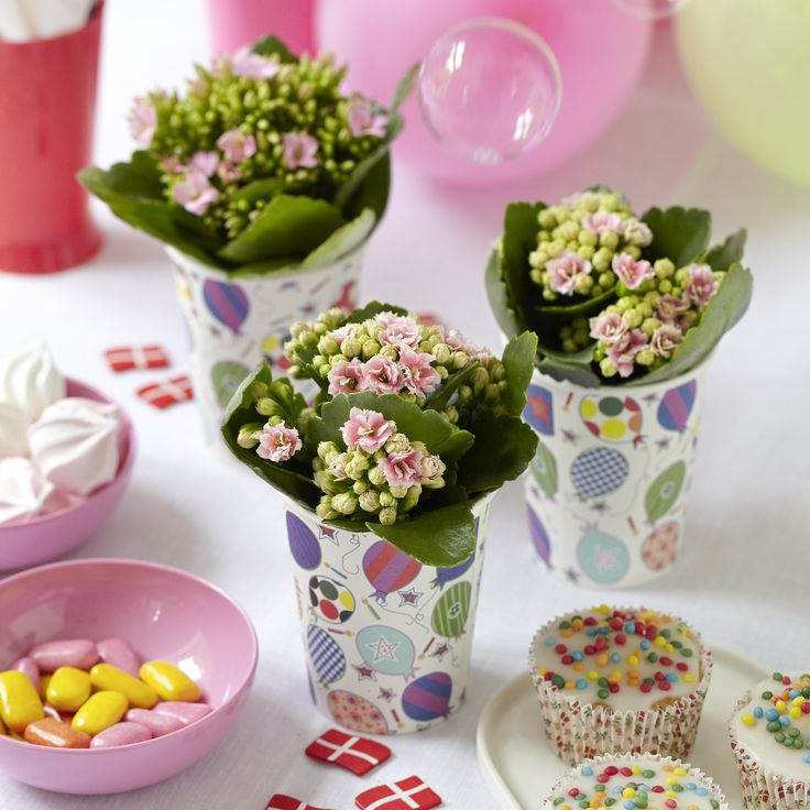 Easy Queen for the princess' birthday Kalanchoe