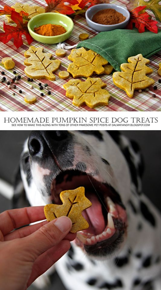 {RECIPE} Pumpkin Spice Dog Treats - A great homemade dog treat idea for Thanksgiving