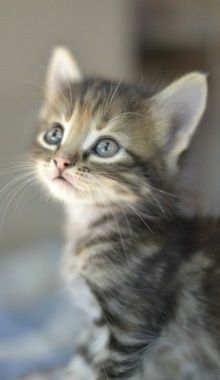 how to train a kitten to behave